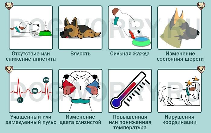 В каких случаях нужно показывать собаку ветеринару?