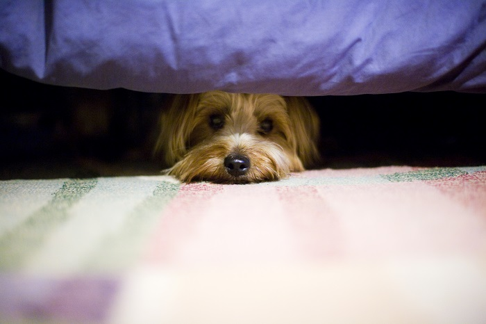 Болезни и травмы как причина того, что собака прячется
