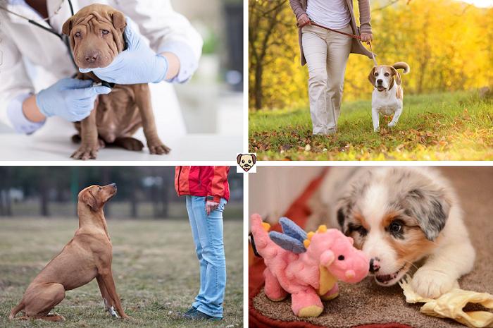 Что делать, если собака постоянно прячется?