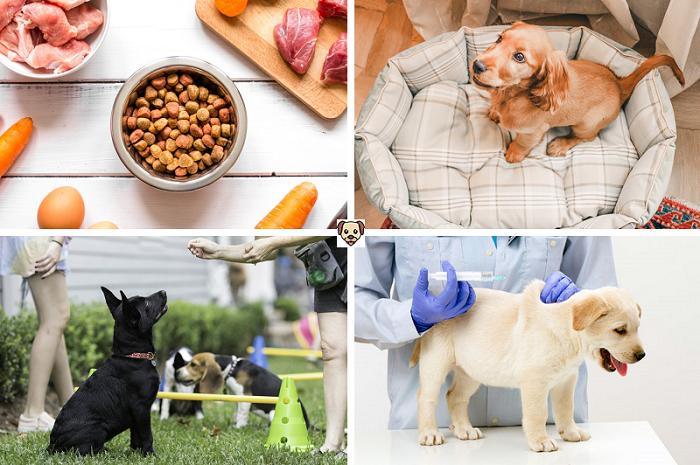 Что влияет на развитие собаки?