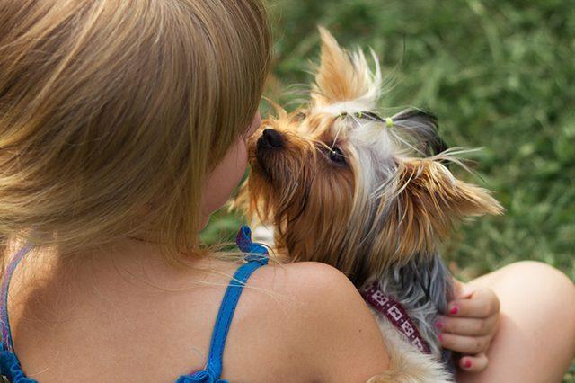 Как йорки относятся к детям, домашним животным?