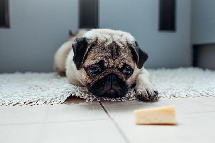 Как правильно давать собакам кисломолочные продукты?
