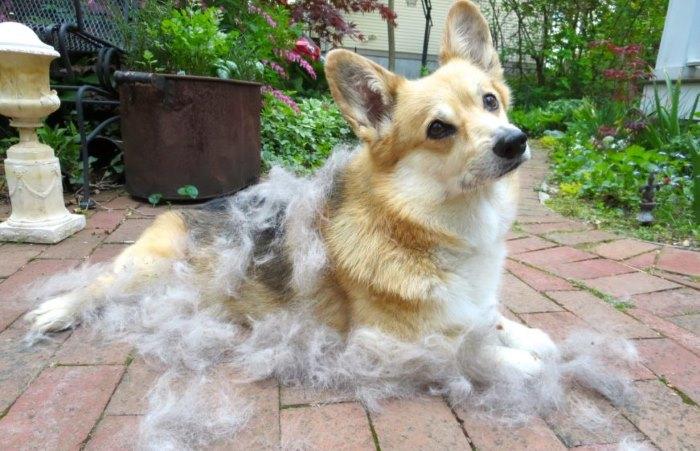 Как влияет шампунь для людей на кожу и шерсть собаки?