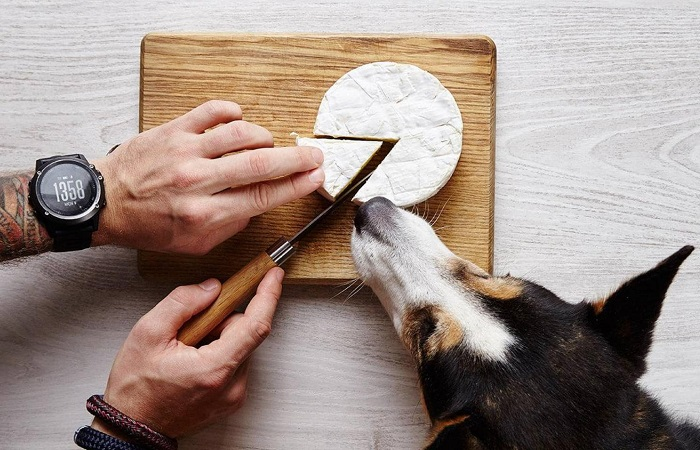Какой сыр можно давать собакам?