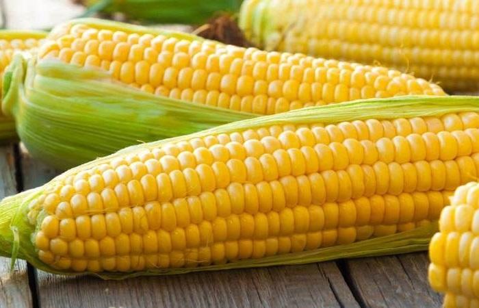 Можно ли давать собакам сырую кукурузу?