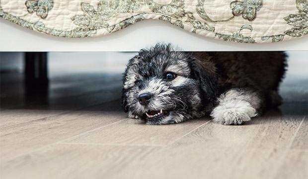 Новый дом для щенка