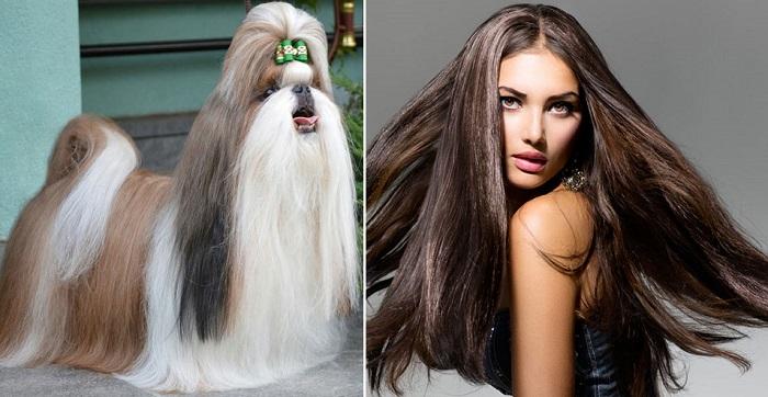 Отличие собачьей шерсти от человеческих волос