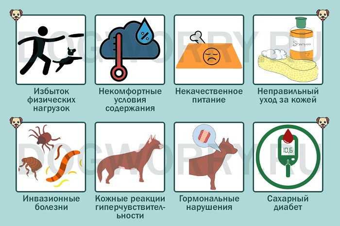 Причины пиодермии у собак
