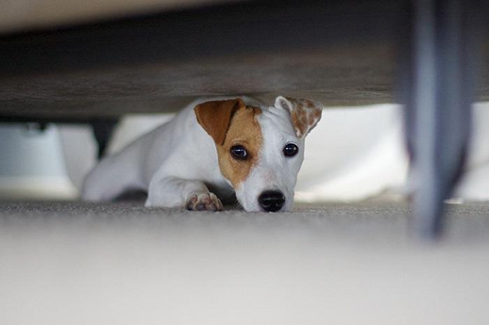 Причины, по которым собака прячется в темное место?