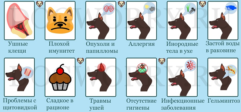 По каким причинам собака трясет головой и чешет уши?