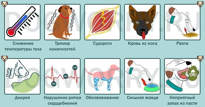 Симптомы отравления помидорами у собак