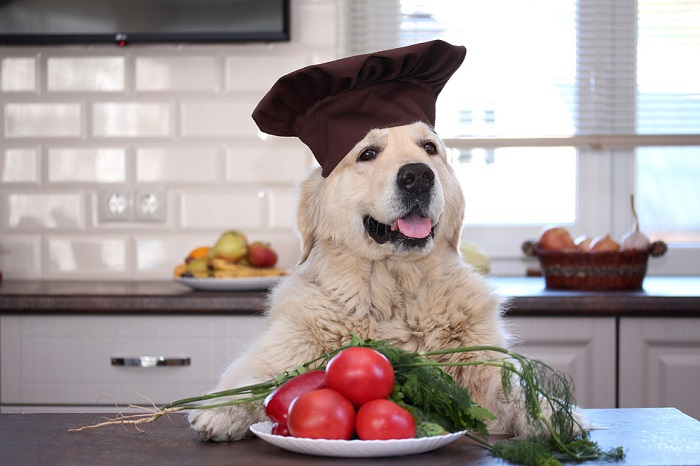 В каком виде можно давать собакам помидоры?