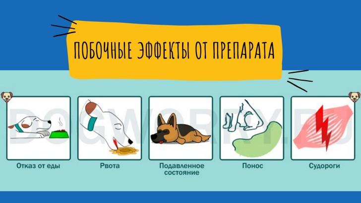 Ципровет для собак - побочный эффект