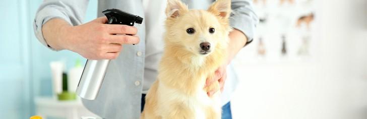Применение сухого шампуня для мойки собаки