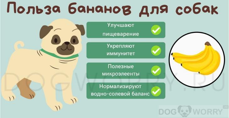 Польза бананов для собаки