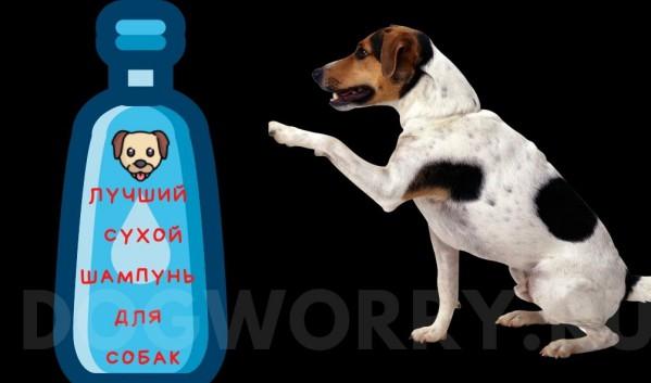 Рейтинг лучших сухих шампуней для собак
