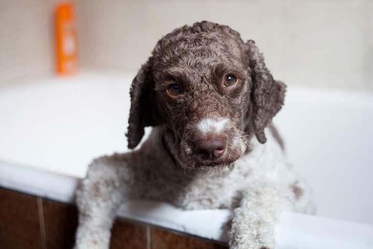 Использование детского мыла для мытья собаки