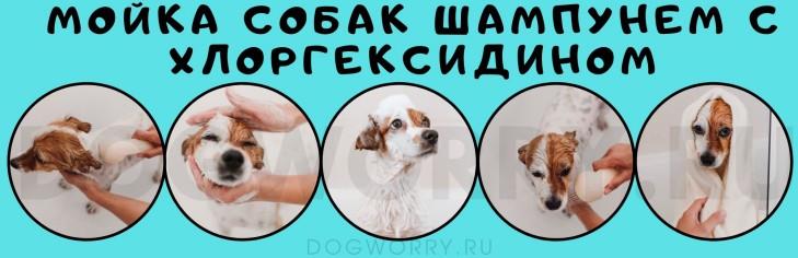 Порядок применения шампуня для собак с хлоргексидином