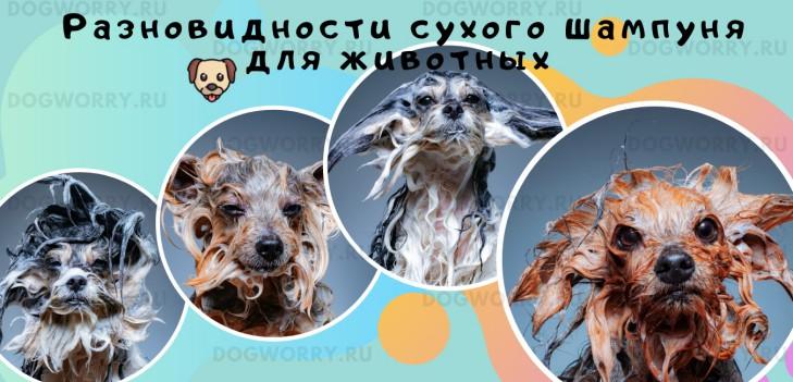 Разновидности сухого шампуня для животных