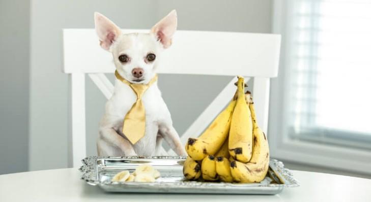 Собака с бананами