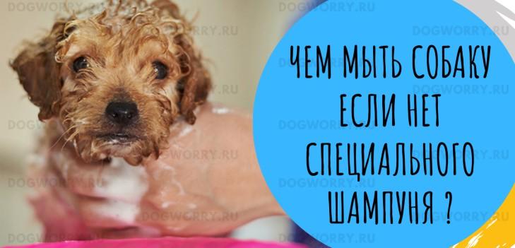 Мойка собаки без собачьего шампуня
