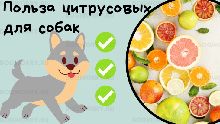 Польза цитрусовых для собак