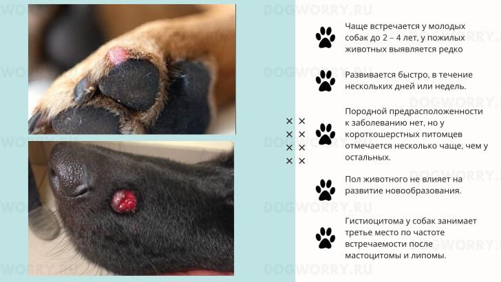 Образование гистиоцитомы у собак