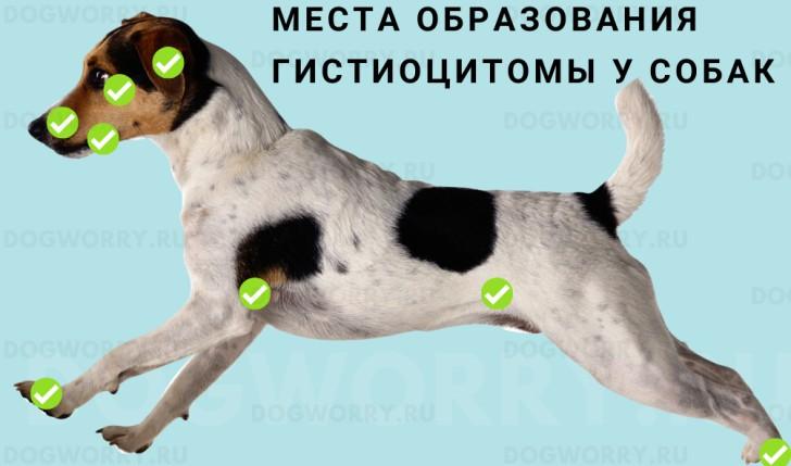 Расположение гистиоцитомы у собак