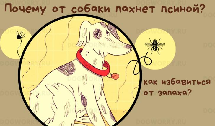 Почему от собаки пахнет псиной?