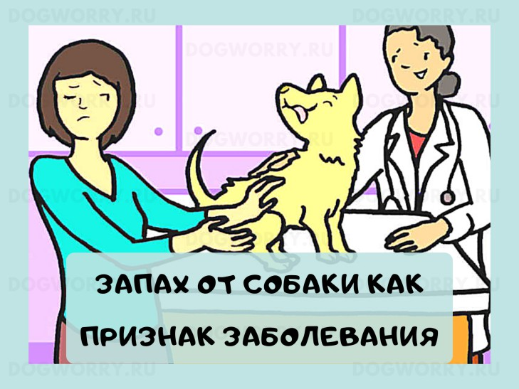 Ситуации когда запах от собаки- это признак болезни