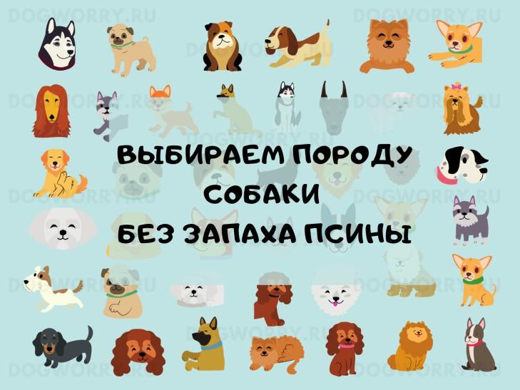 Породы собак с запахом псины и без