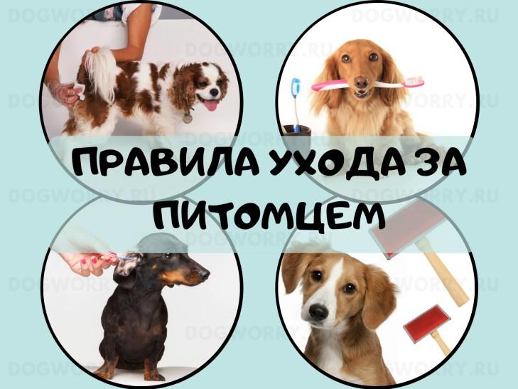 Устранение запаха псины у собаки