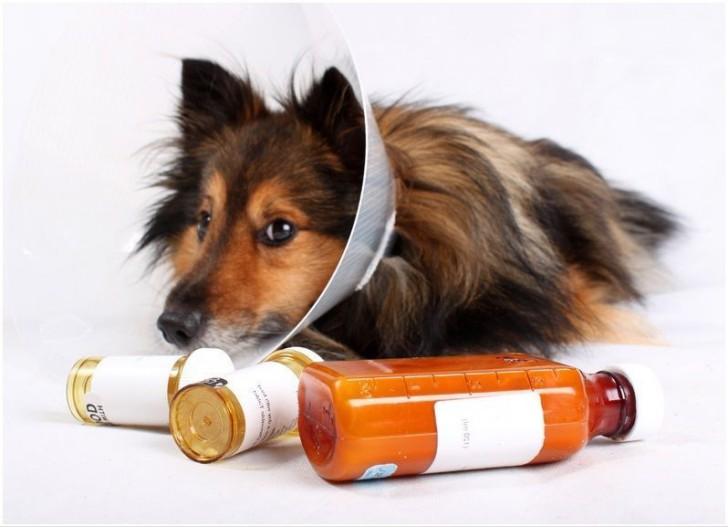 Фенрпаз собакам: подробная инструкция