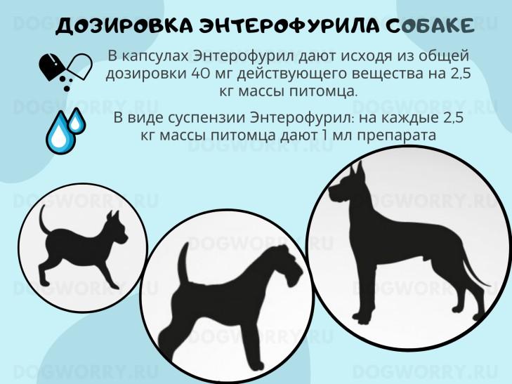 Правила дозировки энтерофурила собаке