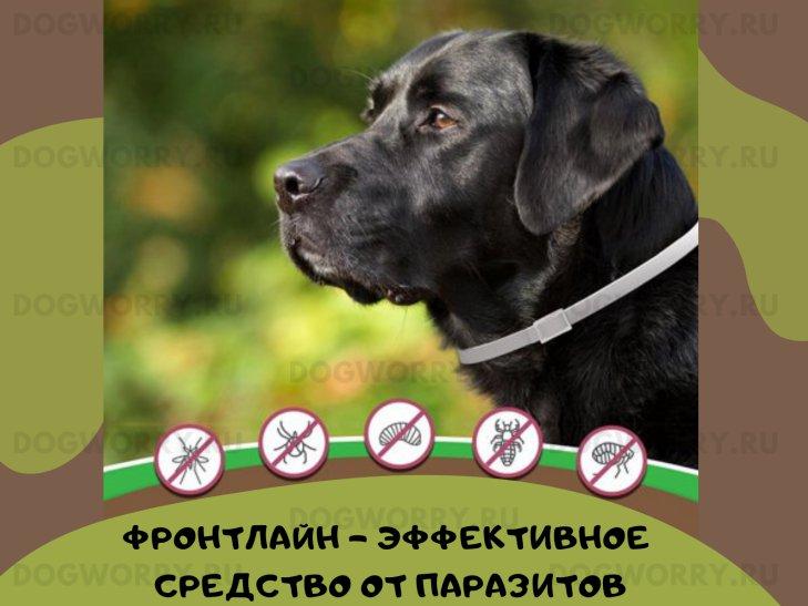 Подробное описание препарата Фронтлайн, его состав, действие, а также отзывы владельцев собак