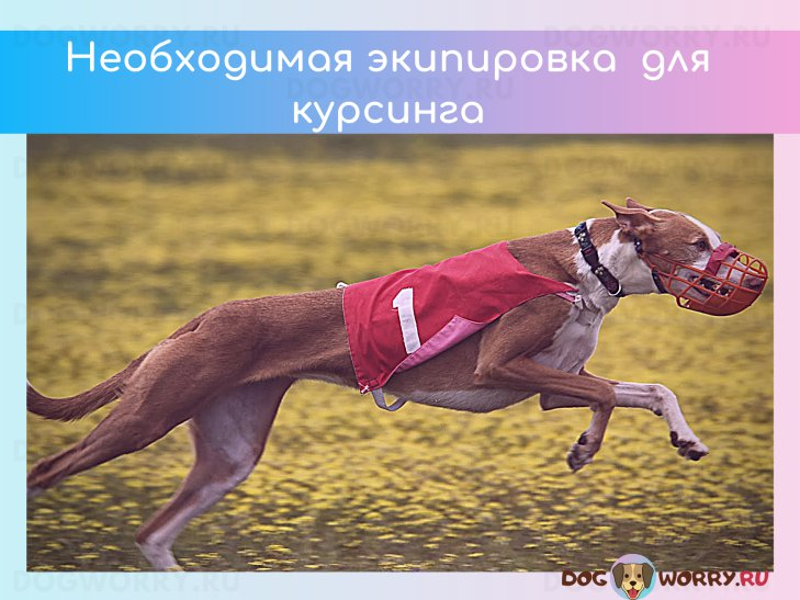Экипировка для курсинга собак