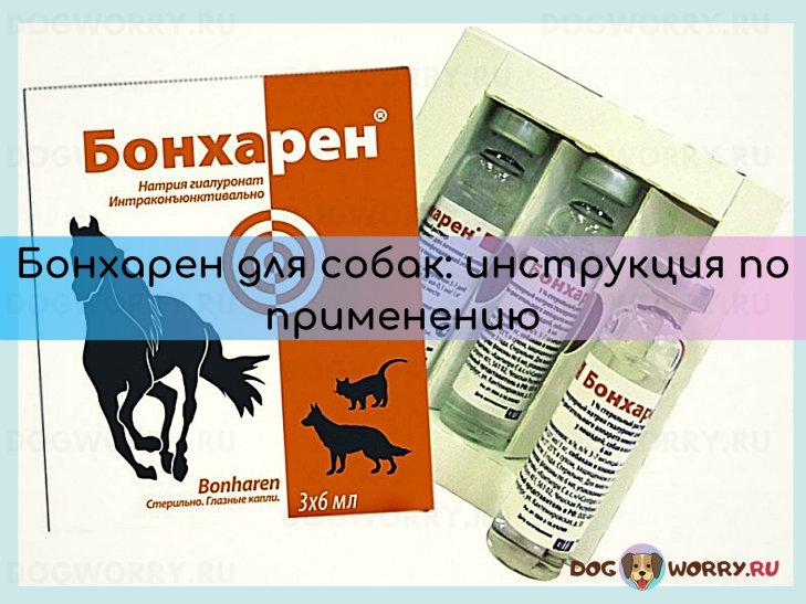 Бонхарен для собак: инструкция, аналоги, цена