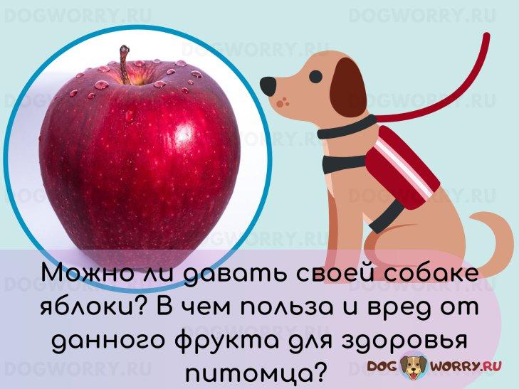 Можно ли давать собакам яблоки?