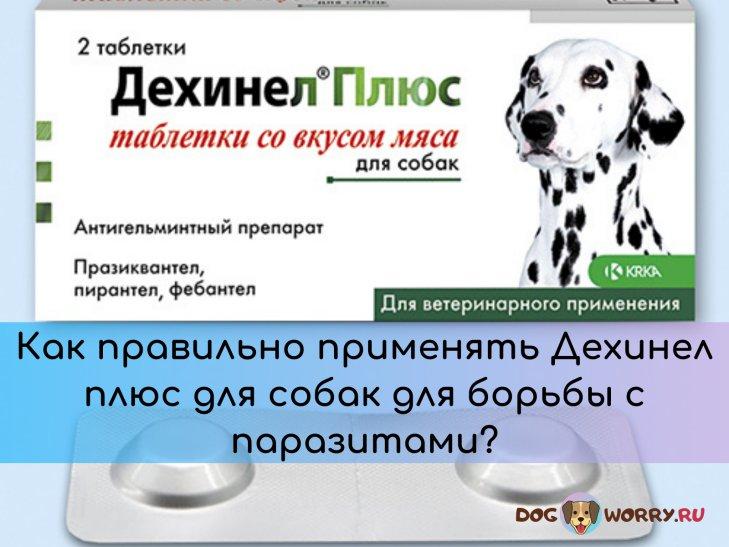 Дехинел плюс для собак: инструкция по применению, отзывы