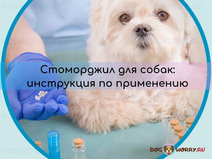 Инструкция по применению препарата Стоморджил для собак