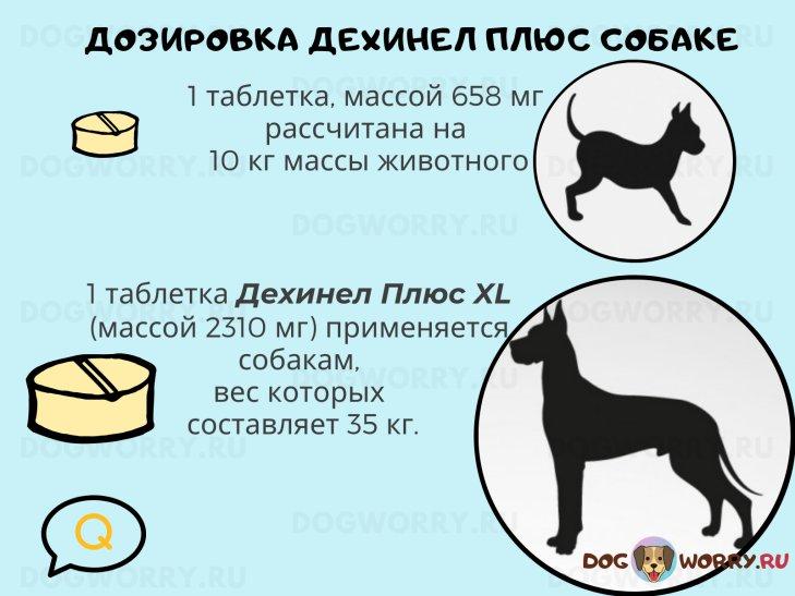 Дозировка Дехинел плюс для собак