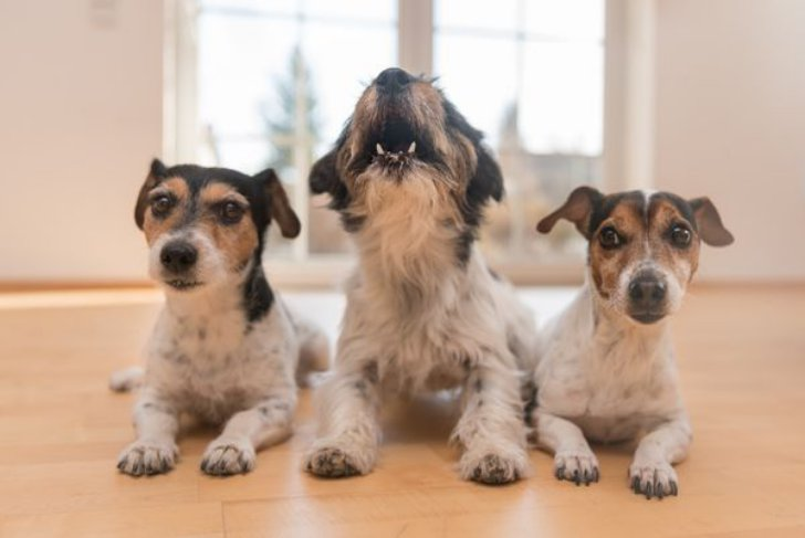 Породы собак для квартиры которые мало лают
