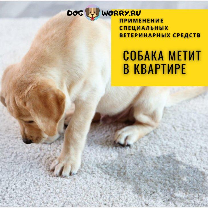 Как отучить собаку метить углы и вещи в квартире? Советы эксперта