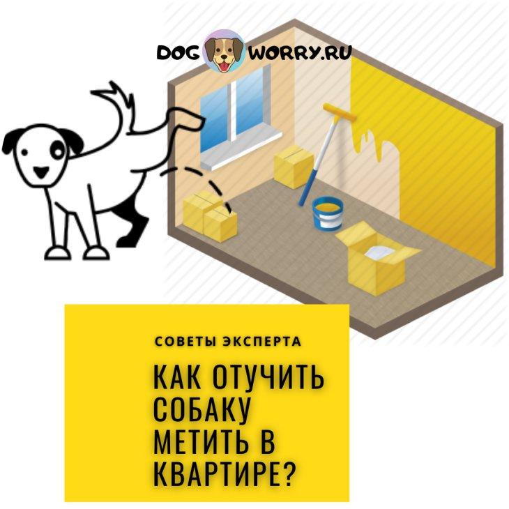 Как отучить собаку метить в квартире?