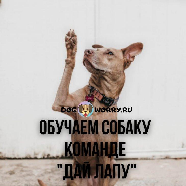 Научить собаку давать лапу