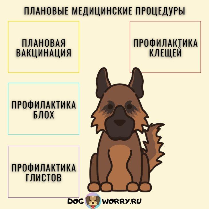 Плановые медицинские процедуры для немецкой овчарки