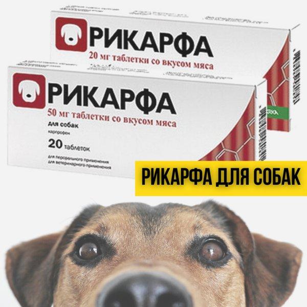Рикарфа для собак: инструкция по применению
