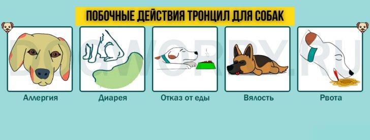 Побочные действия препарата тронцил для собак