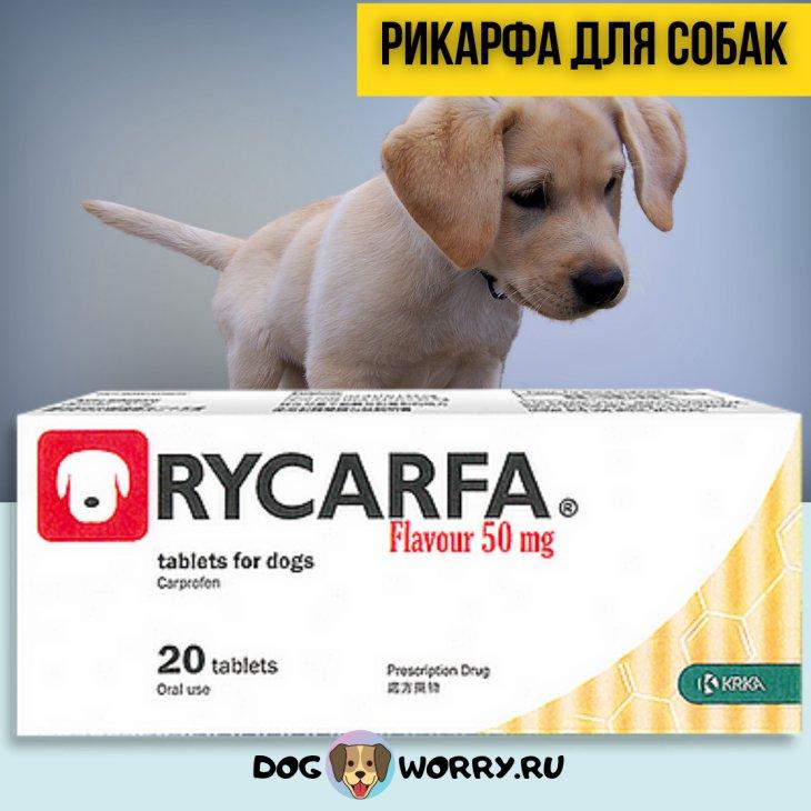 Рикарфа для собак: инструкция по применению, цена, отзывы