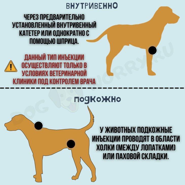 Инструкция по применению препарата рикарфа собакам